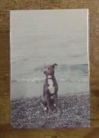 Nombre y forma 5 (postcard)