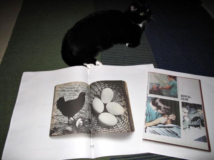 Terrific_Photo_Books_APE_Motto_1305