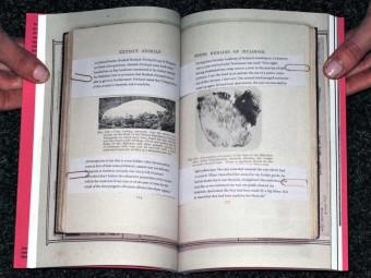 LAND_ANIMAL_NONANIMAL_Anna-Sophie_Springer_Etienne-Turpin_K_Verlag_HKW_Motto_Distribution_2