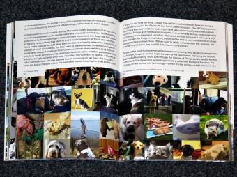 beastly_tierisch_Duncan_Forbes_Daniela_Jansen_spector_books_motto_distribution_04
