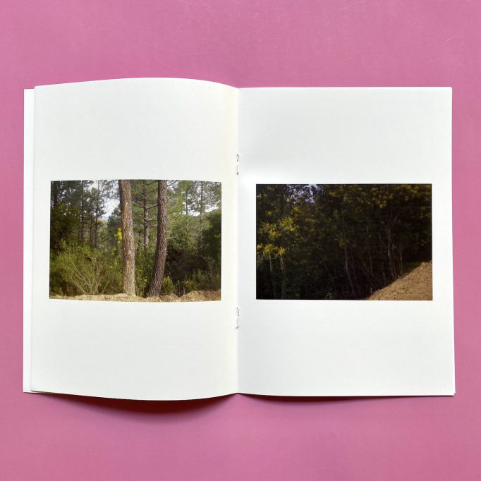 ibis-mimosa-tchering-julien-carreyn-motto-books-crevecoeur-anywave-7