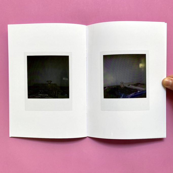 ibis-mimosa-tchering-julien-carreyn-motto-books-crevecoeur-anywave-8
