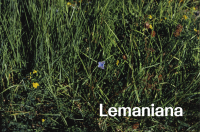 Lemaniana: Reflections on Other Scenes (FR)
